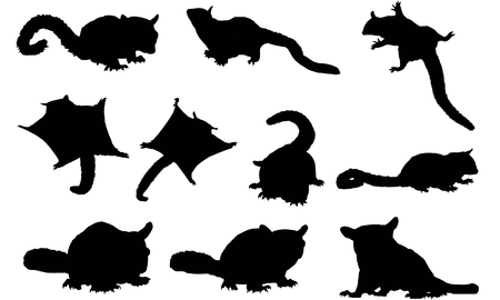 Sugar Glider silhouette illustration
