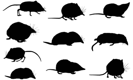 Shrew silhouet illustratie Stock Illustratie