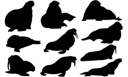 Walrus silhouette illustration