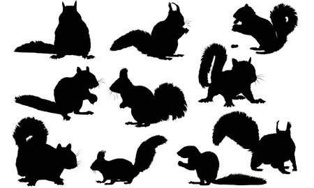 Squirrel silhouette illustration