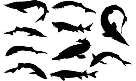 Sturgeon silhouette illustration Иллюстрация