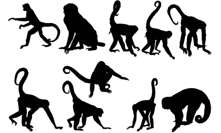 Spider monkey silhouette illustration