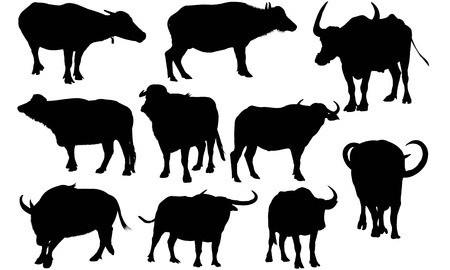 Water buffalo silhouette illustration