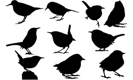 Wren silhouette illustration
