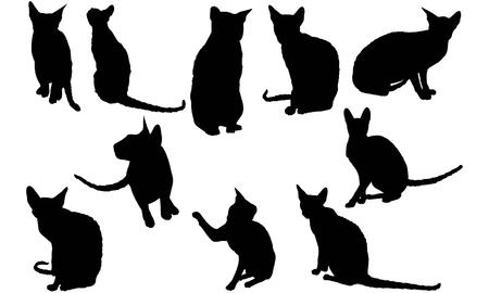 Cornish Rex Cat silhouette illustration