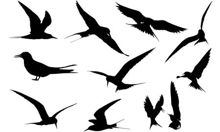 Tern silhouette illustration Иллюстрация