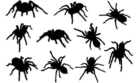 Tarantula silhouette illustration Illustration