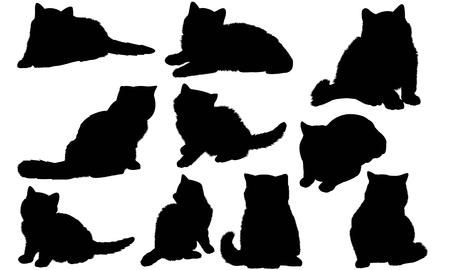 Exotic Shorthair Cat silhouette illustration