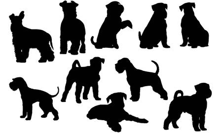 Miniature Schnauzer Dog silhouette illustration Illustration