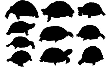 Tortoise silhouette illustration