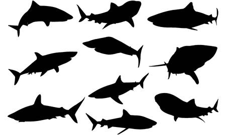 Shark silhouette illustration