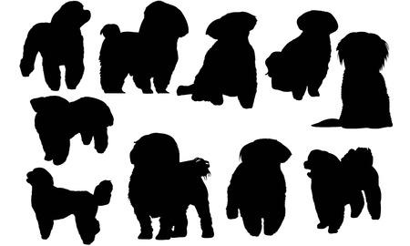Maltese Dog silhouette illustration