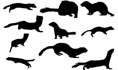 Stoat silhouette illustration