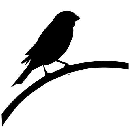 Cardinal Silhouette Vector Graphics Illustration