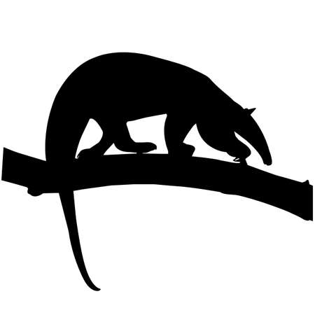 Anteater Silhouette Vector Graphics