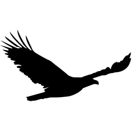 Bald eagle Silhouette Vector Graphics