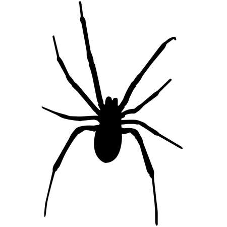Black widow spider Silhouette Vector Graphics Illustration