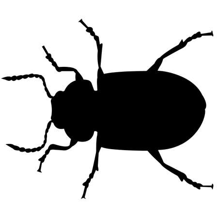 Beetle Silhouette Vector Graphics