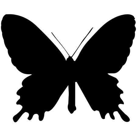 Butterfly Silhouette Vector Graphics