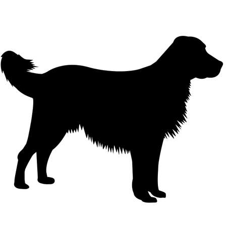 English Setter Dog Silhouette Vector Graphics