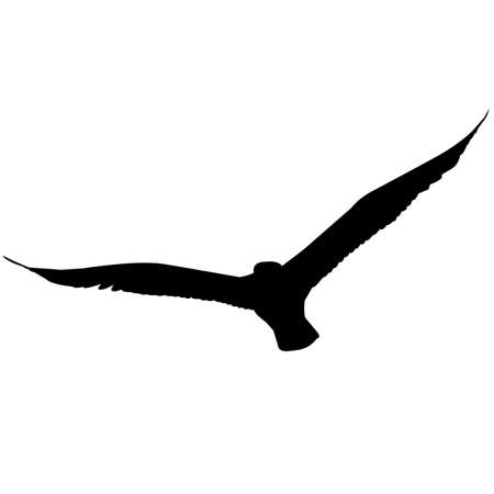 Gull Silhouette Vector Graphics Illustration