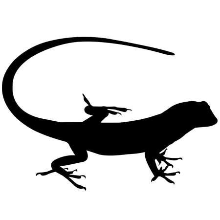 Lizard Silhouette Vector Graphics 向量圖像