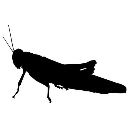 Locust Silhouette Vector Graphics