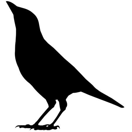 Magpie Silhouette Vector Graphics