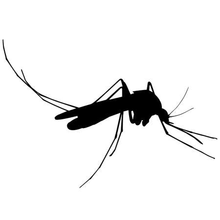 Mosquito Silhouette Vector Graphics Ilustracje wektorowe