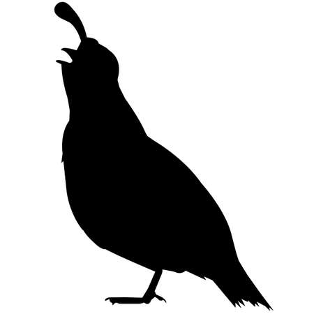 New world quail Silhouette Vector Graphics