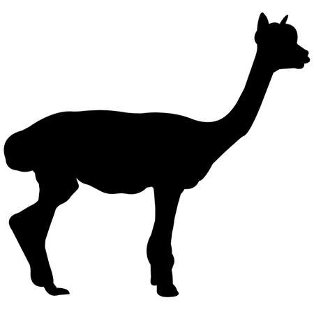 Llama Silhouette Vector Graphics
