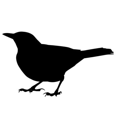 Nightingale Silhouette Vector Graphics