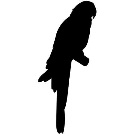 Parrot Silhouette Vector Graphics 矢量图像