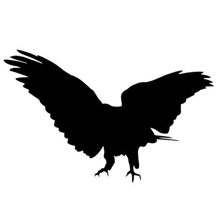 Peregrine falcon Silhouette Vector Graphics