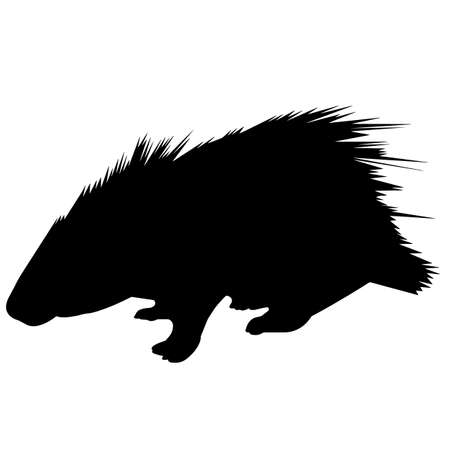 Porcupine Silhouette Vector Graphics
