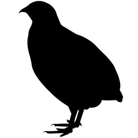 Quail Silhouette Vector Graphics
