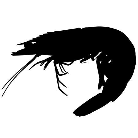Prawn Silhouette Vector Graphics
