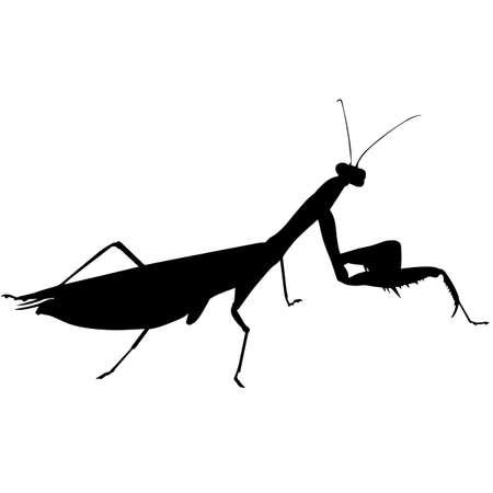 Praying mantis Silhouette Vector Graphics Illustration