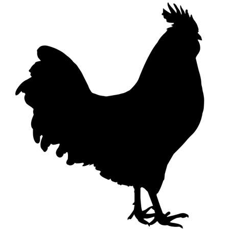 Rooster Silhouette Vector Graphics Vetores