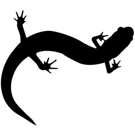 Salamander Silhouette Vector Graphics Ilustração