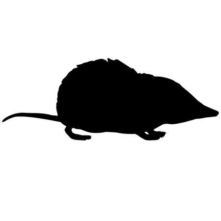 Shrew Silhouette Vector Graphics