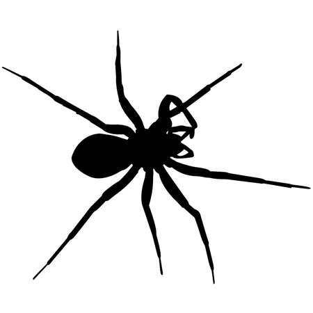 Spider Silhouette Vector Graphics Ilustración de vector