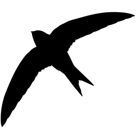 Swift Silhouette Vector Graphics