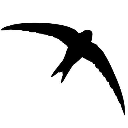 Swift Silhouette Vector Graphics Vecteurs