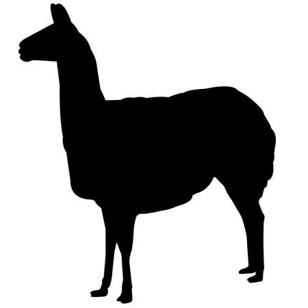 Vicuna Silhouette Vector Graphics  イラスト・ベクター素材