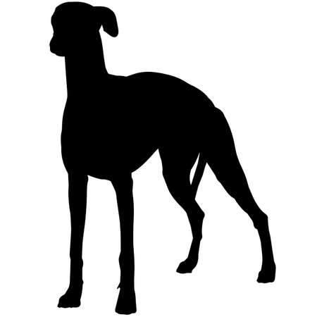Whippet Silhouette Vector Graphics