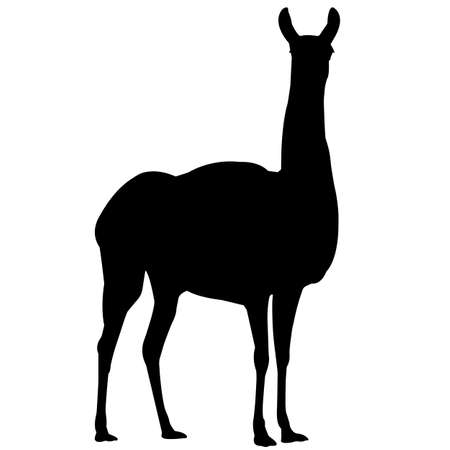 Vicuna Silhouette Vector Graphics 写真素材 - 157930404