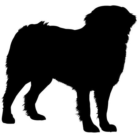 Bernese Mountain Dog Silhouette Vector Graphics
