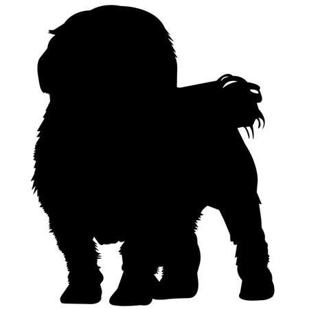Maltese Dog Silhouette Vector Graphics