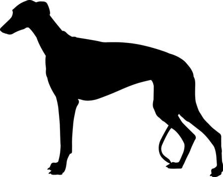 Greyhound 7 isolated vector silhouette